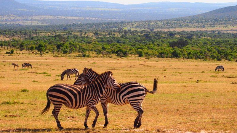 Come organizzare un viaggio in Kenya: una nazione magica e affascinante